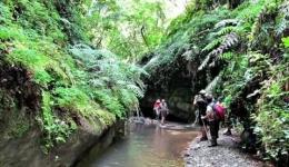 La Valle dei Mulini - Trekking nell'entroterra vibonese tra natura ed enogastronomia